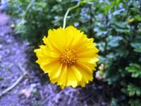 08.5.31裏の花2