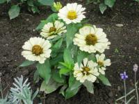 08年隣の花6