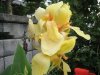 08.裏の花2