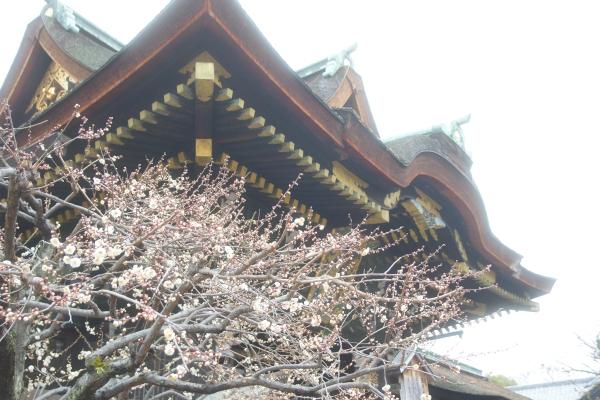 20120225_07_kitano.jpg