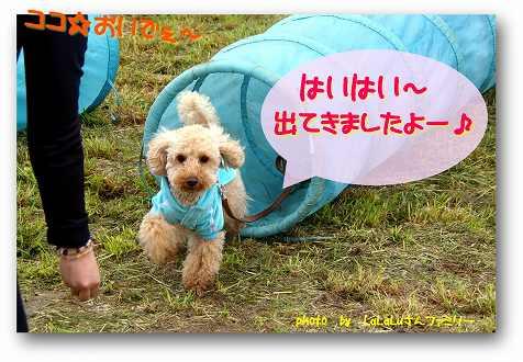 ah-1Lalalu-san-2.jpg