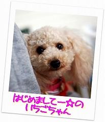 bi-1080511-14.jpg