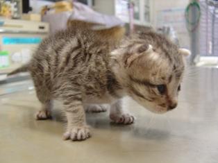DSC04019子猫