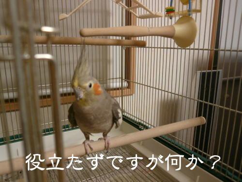 2008031001.jpg