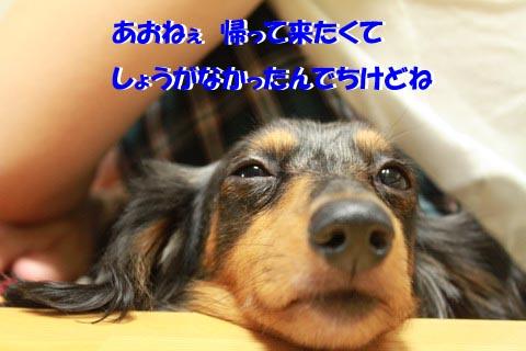 IMG_4289のコピー