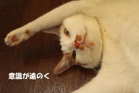 IMG_0334_2.jpg