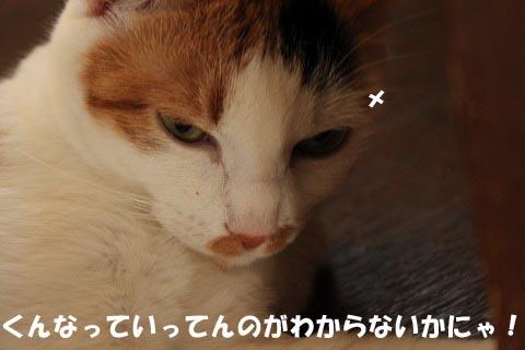 IMG_0398_2.jpg