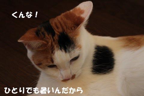 IMG_0411_3.jpg