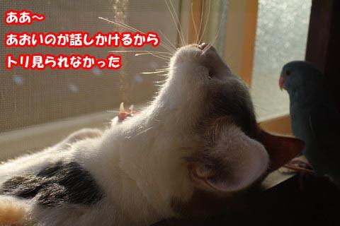 IMG_0439_2.jpg