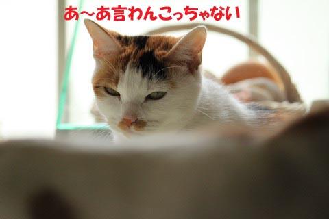 IMG_3587.jpg