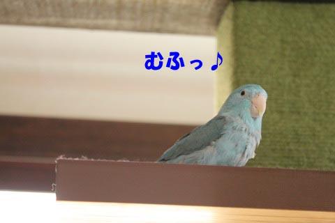 IMG_3849_2.jpg