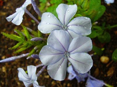 6月から咲いてる花