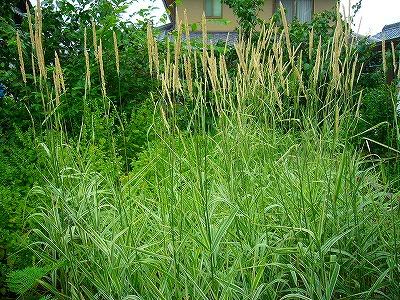 涼しそうな草