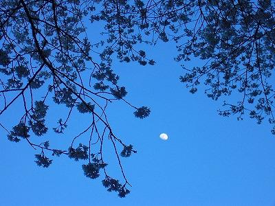 淡墨桜陰と月