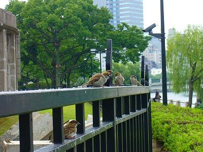 平和公園雀2