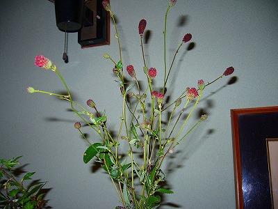 吾亦紅花瓶