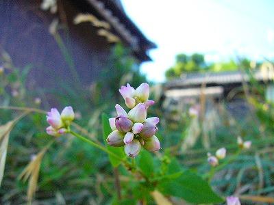 伊吹の草花