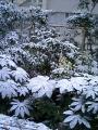 葉っぱ、雪