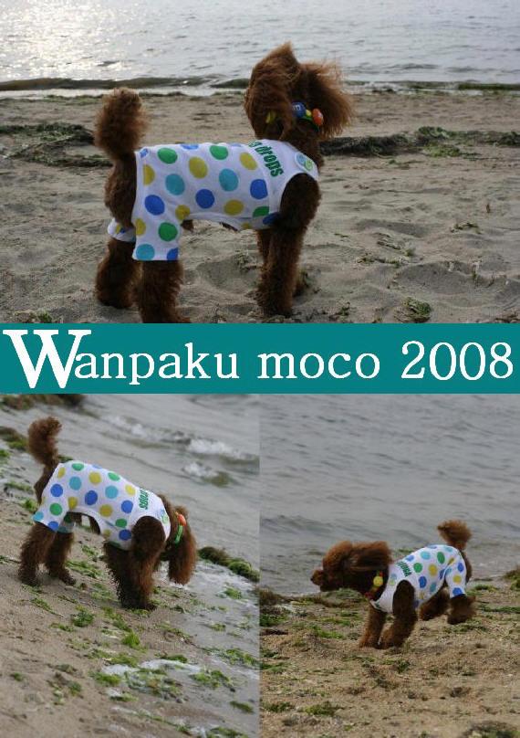 20080523-05.jpg