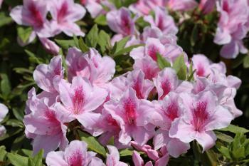 前坪公園の花