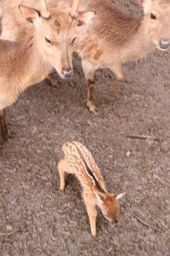 大石 小動物園