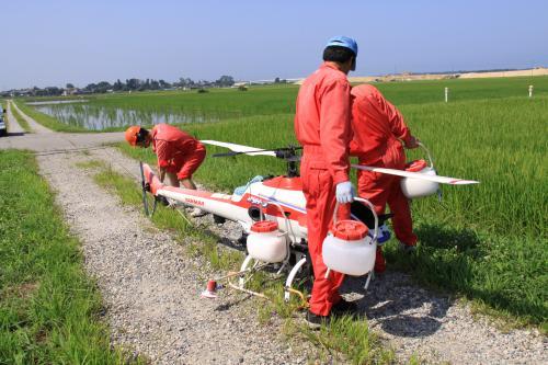 岩船産コシヒカリ ヘリコプター 害虫防除