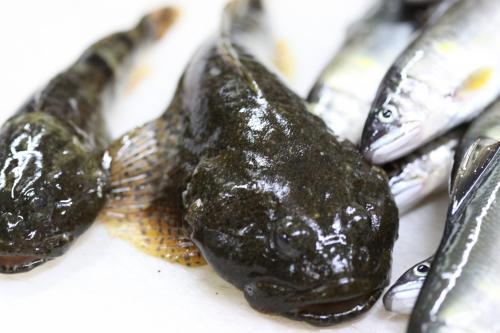 いそべ 荒川鮎釣り