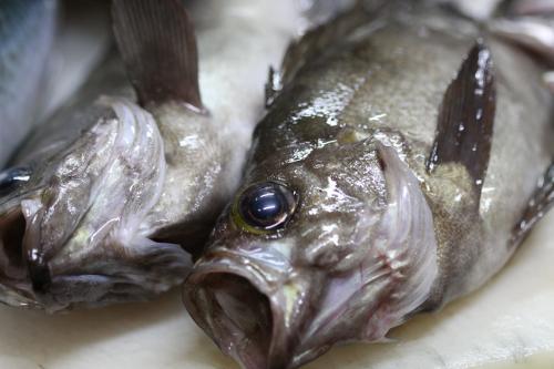 いそべの 日本海 メバル