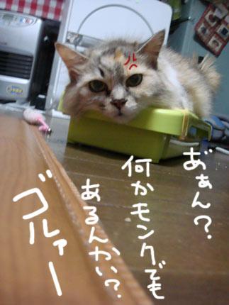 DSC06164.jpg