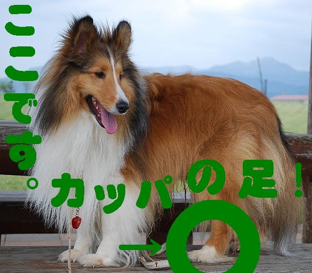 DSC_0064_2.jpg