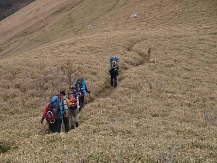 剣山脈の笹