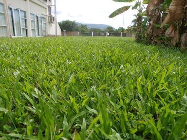 芝生がきもちいい