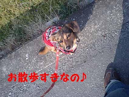 お散歩すき~