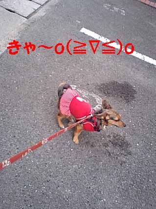きゃ~o(≧∇≦)o