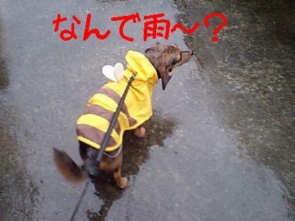 なんで雨~?