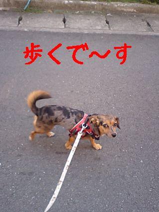 歩くで~す