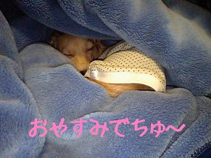 おやすみでちゅ~
