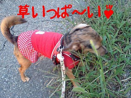 草いっぱ~い♪