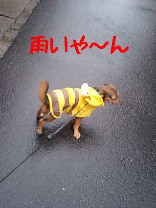 雨いや~ん