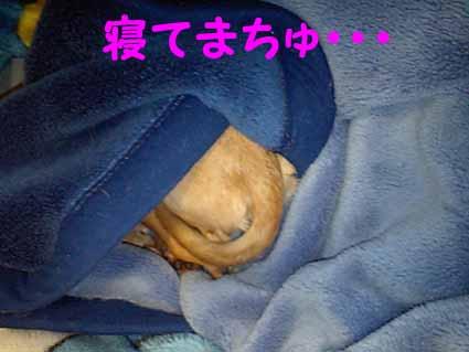 寝てまちゅ・・・