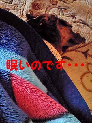 眠いのです・・・