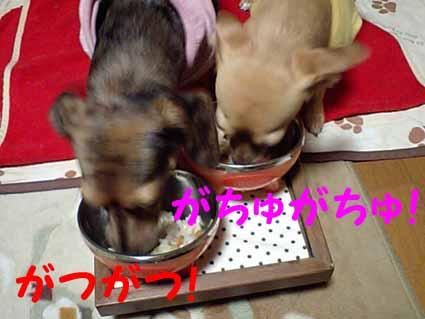 食い意地姉妹