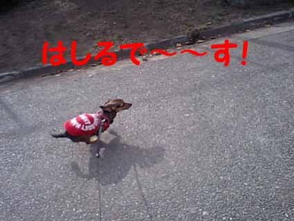走るで~~す!