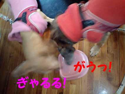 山羊ミルク