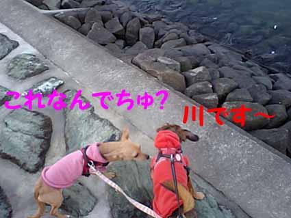 吉野川です