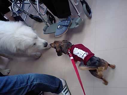 セラピー犬体験
