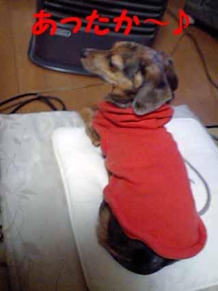 ファンヒーター犬