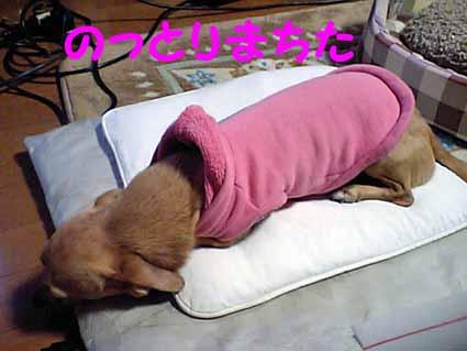 ファンヒーター犬2