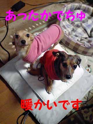 ファンヒーター犬たち