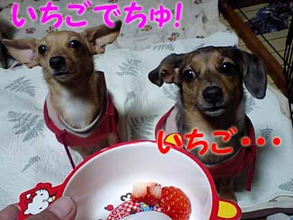 苺です~♪